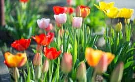 The Gardener's Calendar in February