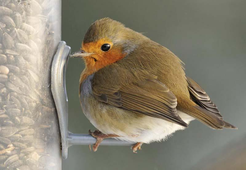 Birdcare at Bumbles