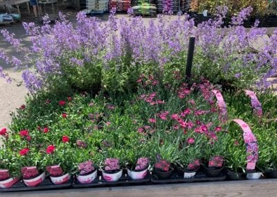 autumn bedding and borders at Bumbles Plant Centre