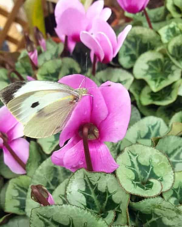 We love bees at Bumbles Plant Centre!