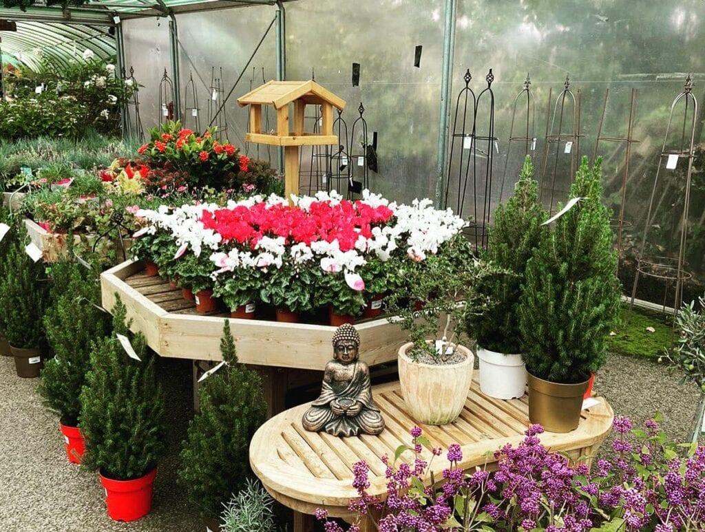 Autumn & Winter plants at Bumbles, October 2020