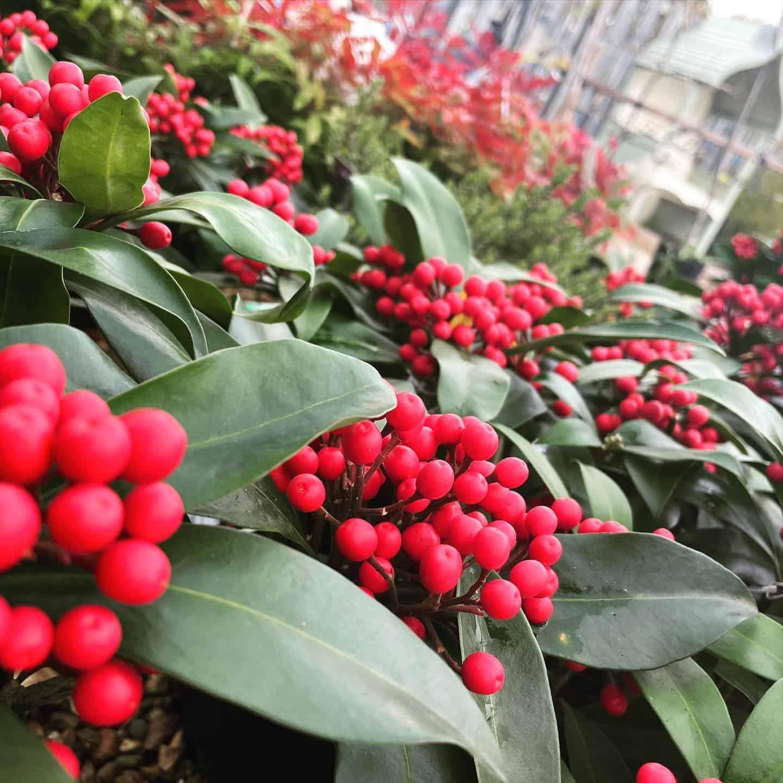 Winter colours at Bumbles, November 2020