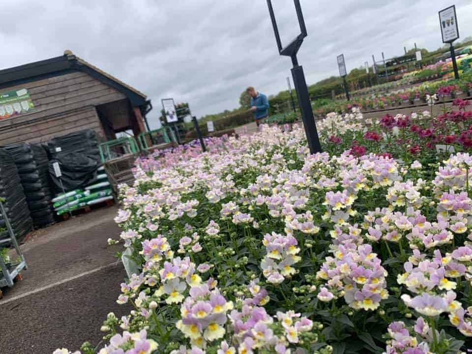 Bedding plants now in at Bumbles Plant Centre