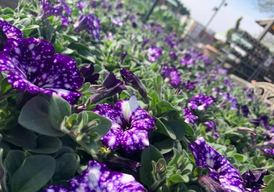 Ross's post-Easter ramble around plant area!