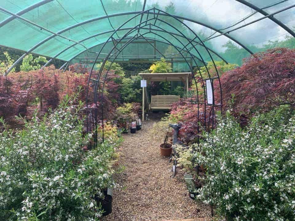 Acer tranquillity corner at Bumbles Plant Centre