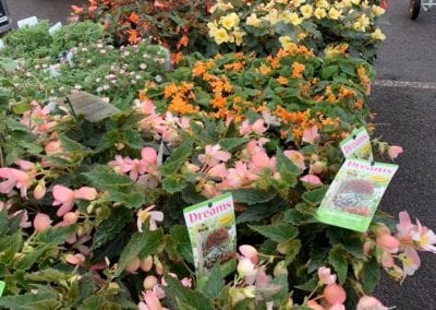 Spring bedding plants at Bumbles Plant Centre