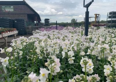 Bee friendly spring bedding at Bumbles Plant Centre