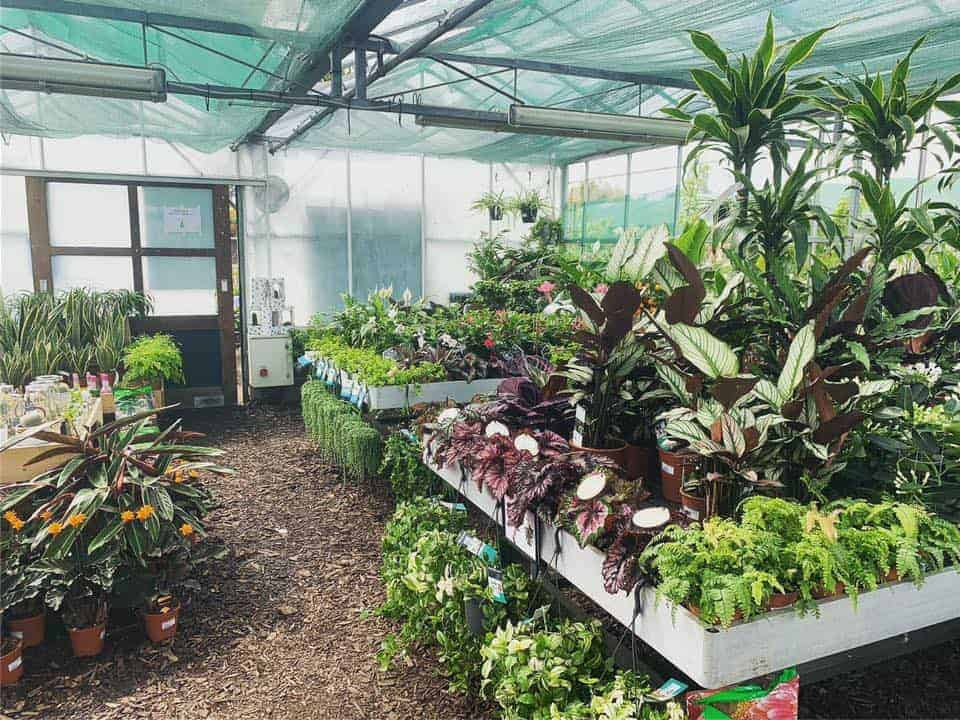 Fantastic range in the glasshouse at Bumbles Plant Centre