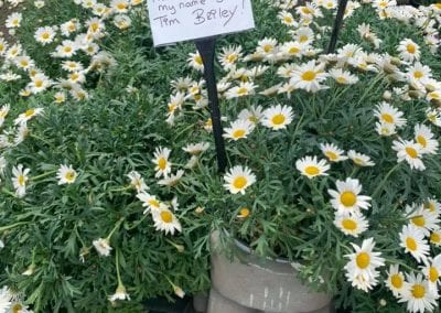 Great value plants for spring at Bumbles Plant Centre