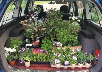 A boot full of plants from Bumbles, on their way to two different homes (and patios)