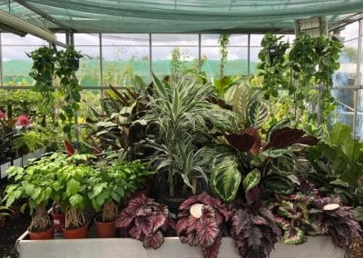 Exotic and indoor plants at Bumbles