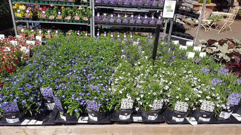 Beautiful New Perennials And Large Bedding Now In Bumbles Plant