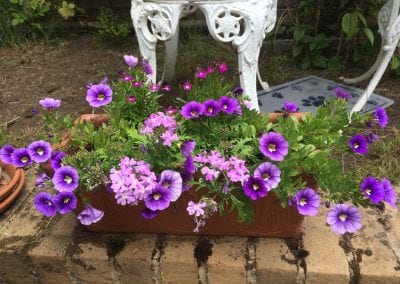 Purple planter, June 2019