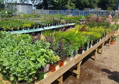 New Perennials for shade, semi shade, dry beds and full sun at Bumbles Plant Centre