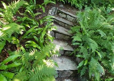 Kingston National Trust garden fernery