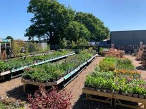 Perennial benches bursting at the seams at Bumbles Plant Centre, 31st May 2020