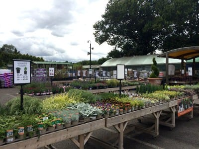 Plants for autumn tubs & baskets at Bumbles Plant Centre