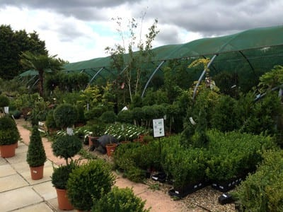 Climbers ready to plant at Bumbles Plant Centre