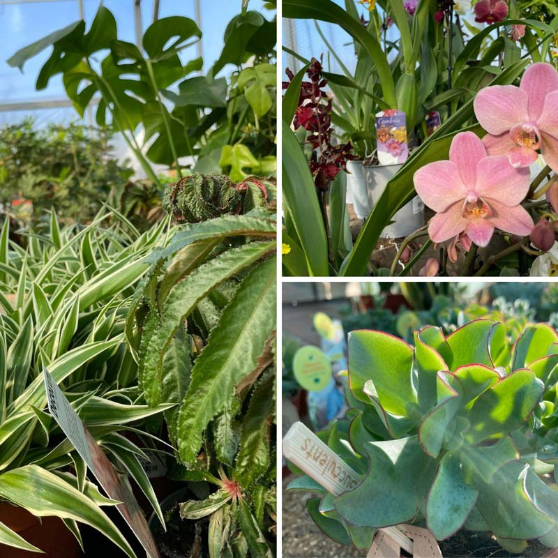 Orchids, succulents and more in the glasshouse at Bumbles, March 2021