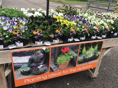 Planting ideas for autumn at Bumbles Plant Centre