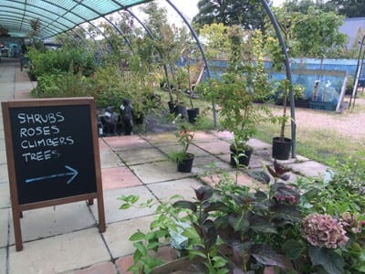 Shrubs, roses, climbers & trees at Bumbles Plant Centre