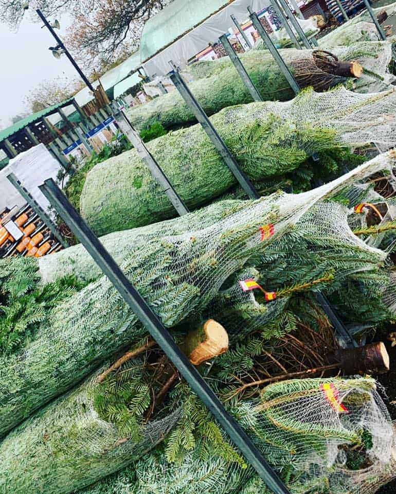 The Christmas Trees have arrived! At Bumbles Plant Centre