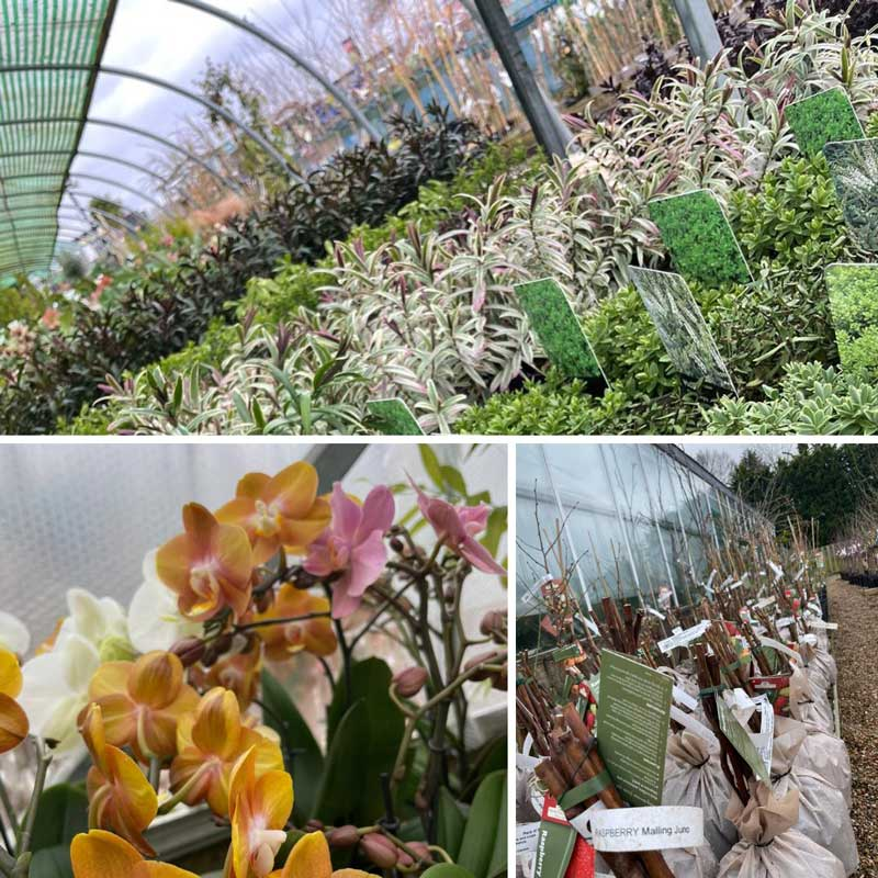 Fruit trees and Orchids in the glasshouse, Bumbles February 2021