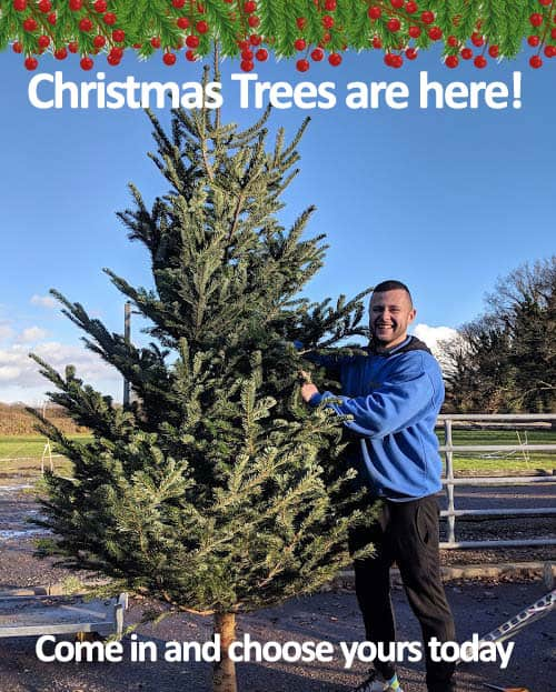 Christmas Trees are in! Come and choose yours today at Bumbles