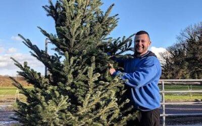 Christmas Trees at Bumbles