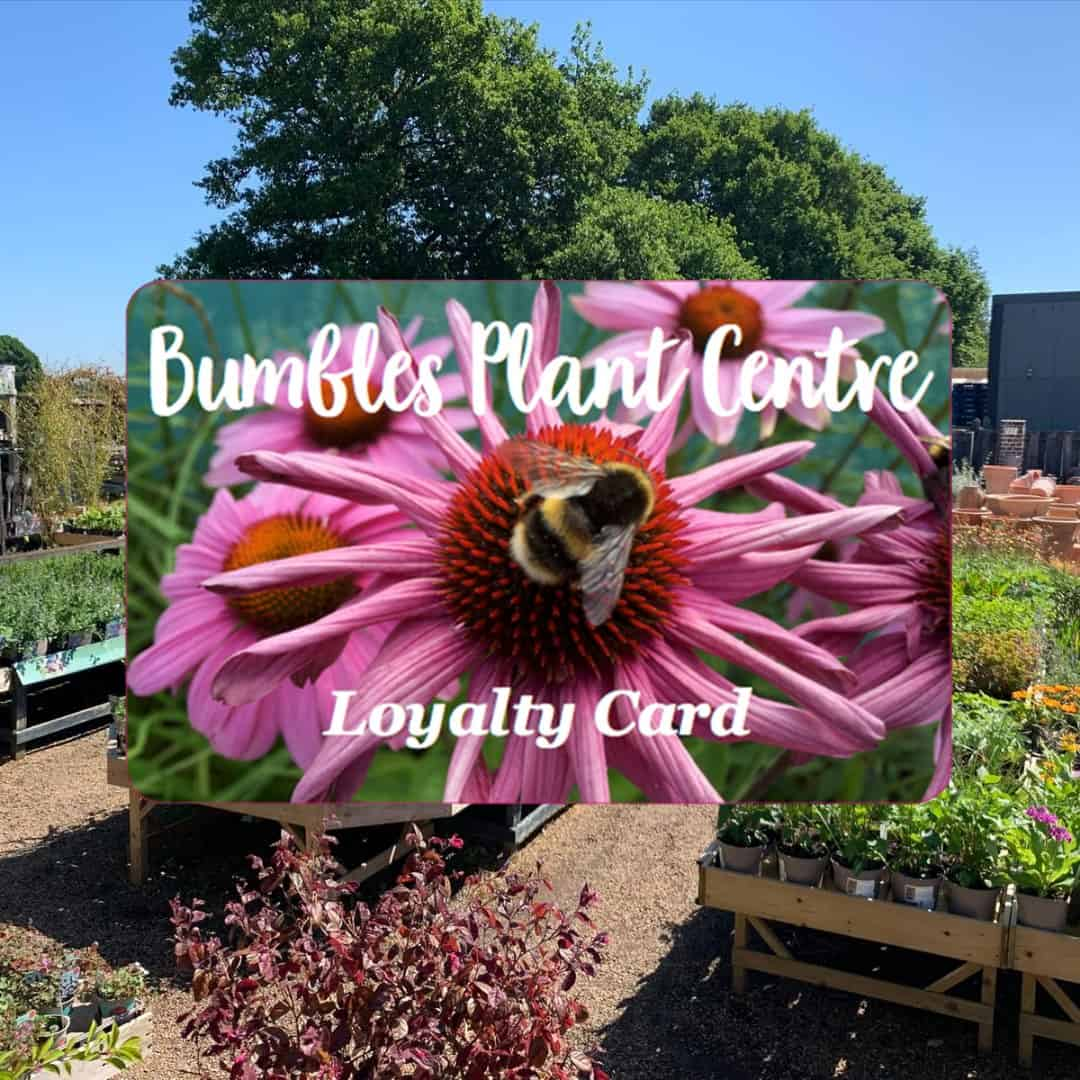 Bumbles Loyalty Card is here, January 2021