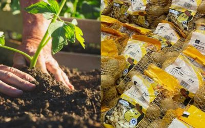 Getting started with Seed Potatoes