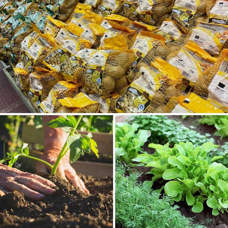 February garden jobs - seed potatoes, Bumbles February 2021