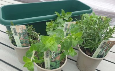 Half Term Projects – Herb Planter