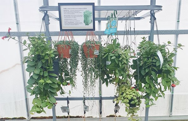 Houseplants for health! Bumbles February 2021