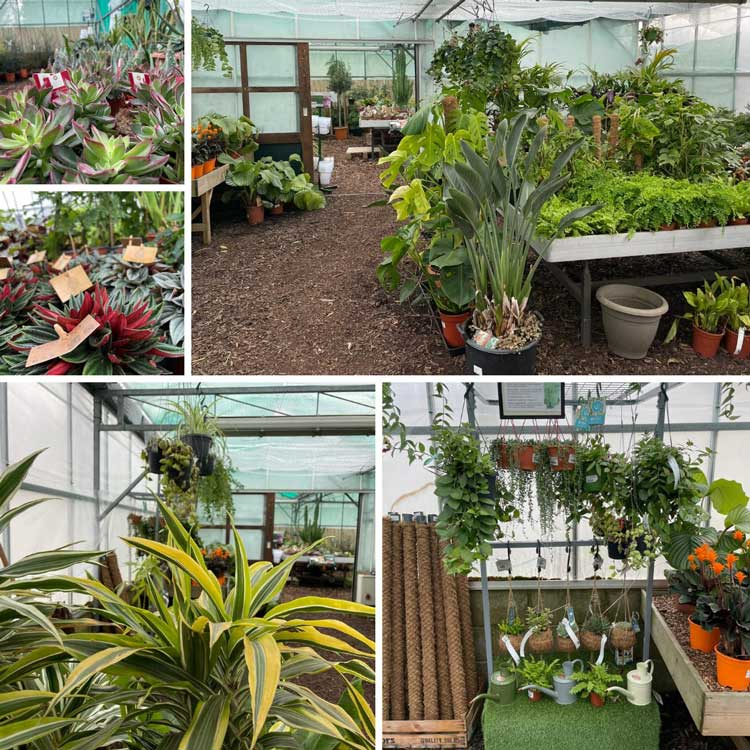 Visit the houseplants in our glasshouse, Bumbles February 2021